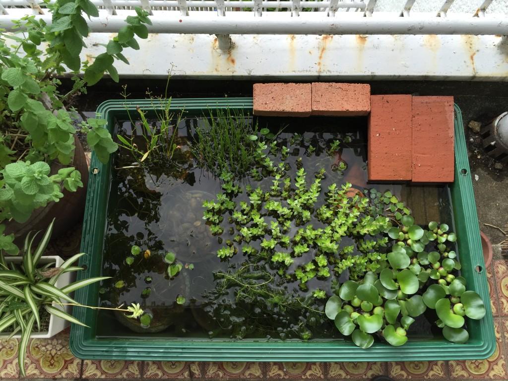 我が家のメダカ池